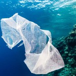 Fashionable alternative for plastic bags